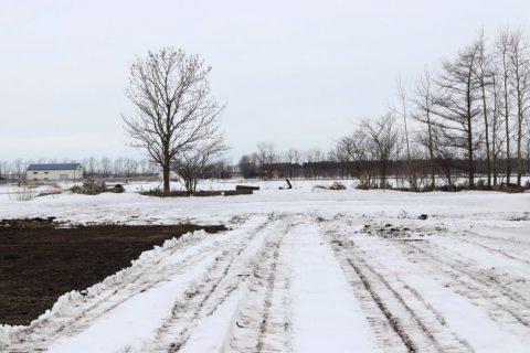 雪下 にんじん 畑 越冬